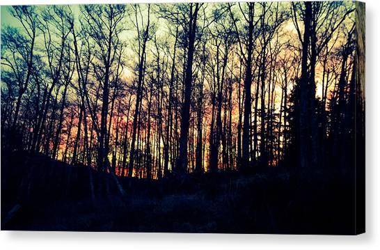 Winter Grove Canvas Print