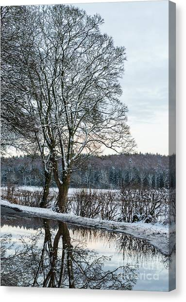 Treeline Canvas Print - Winter In England, Uk by Amanda Elwell