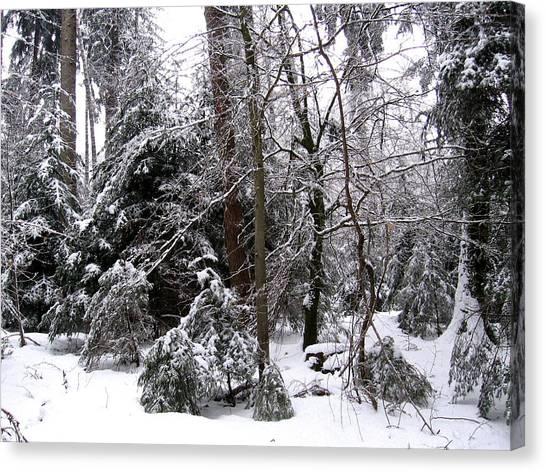 Winter In Krauchthal IIi Canvas Print by David Ritsema