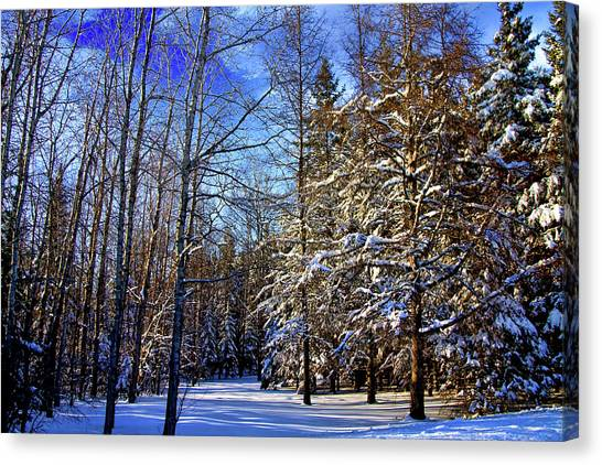 Winter In Maine Canvas Print by Gary Smith