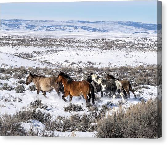 Winter In Sand Wash Basin - Wild Mustangs On The Run Canvas Print