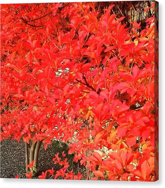 Pumpkins Canvas Print - Winter Leaves  So Red! So by Lady Pumpkin