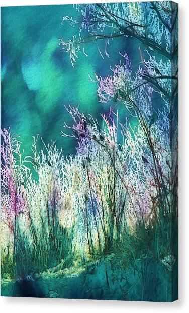 Winter Lights Canvas Print