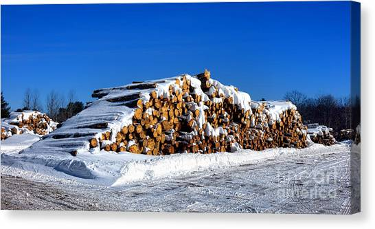 Deforestation Canvas Print - Winter Logs by Olivier Le Queinec