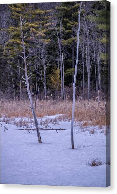Winter Marsh And Trees Canvas Print