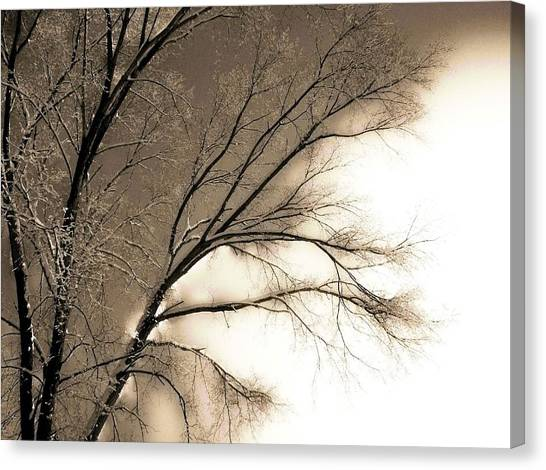 Winter Mulberry  Canvas Print by Larry Ney  II