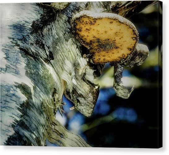 Winter Mushroom Canvas Print