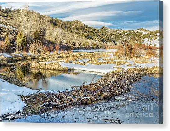 Winter On Beaver Swamp Canvas Print