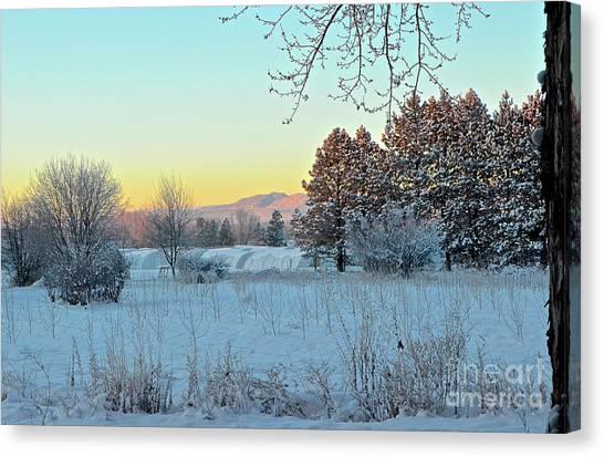Winter On The Tree Farm Canvas Print