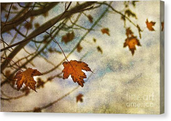 Leaf Canvas Print - Winter On The Way by Rebecca Cozart