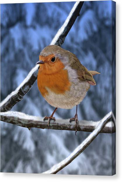 Winter Robin Canvas Print