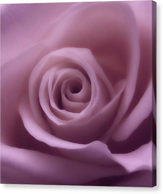 Winter Rose 7 Canvas Print