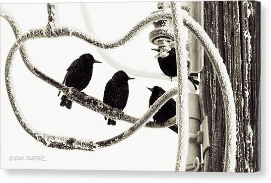 Canvas Print - Winter Starlings by Don Durfee