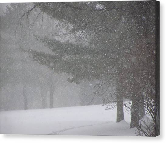 Winter Storm In Bush Canvas Print by Richard Mitchell