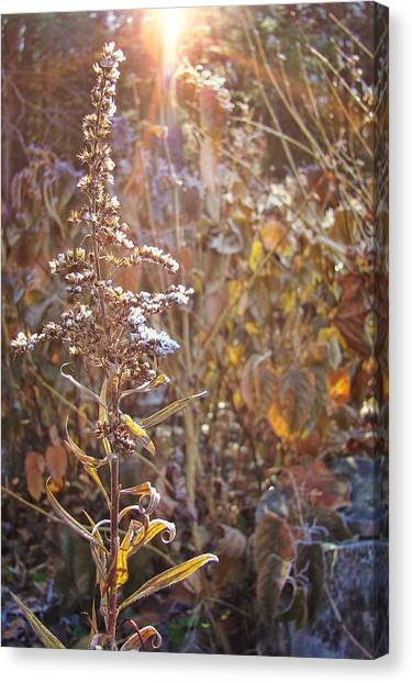 Winter Sun Texture Canvas Print by JAMART Photography