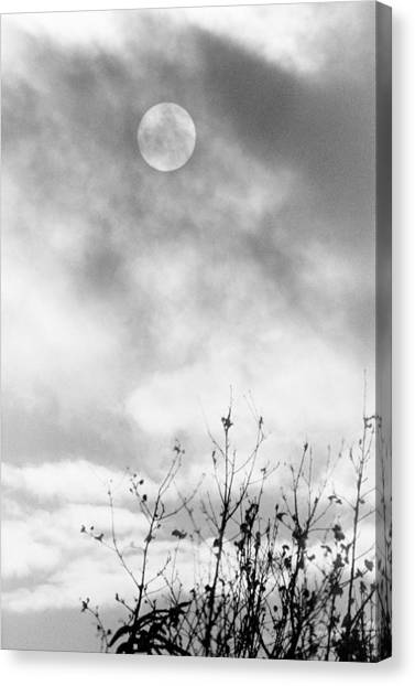Winter Sun Canvas Print by Randall Paar