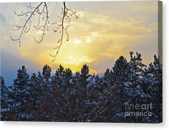 Winter Sunset On The Tree Farm #1 Canvas Print