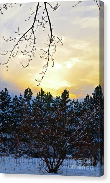 Winter Sunset On The Tree Farm #2 Canvas Print