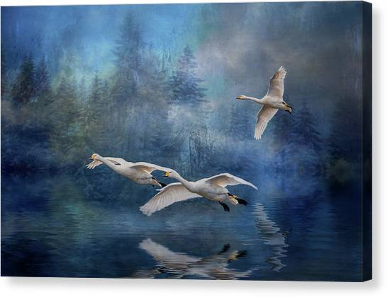 Winter Swans Canvas Print