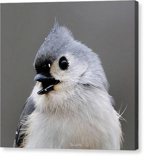 Winter Titmouse Canvas Print