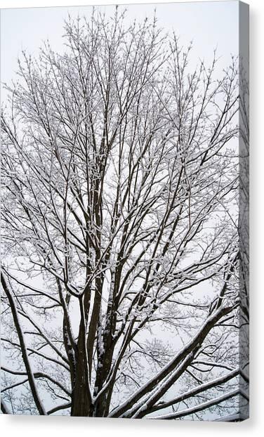 Winter Tree    Poster Canvas Print