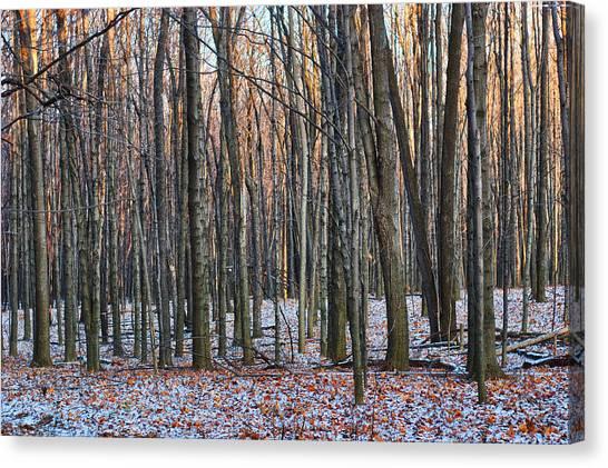 Winter - Uw Arboretum Madison Wisconsin Canvas Print