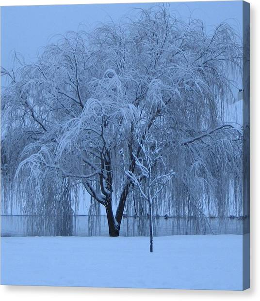 Winter Willow Tree Before Dawn_fort Worth_tx Canvas Print