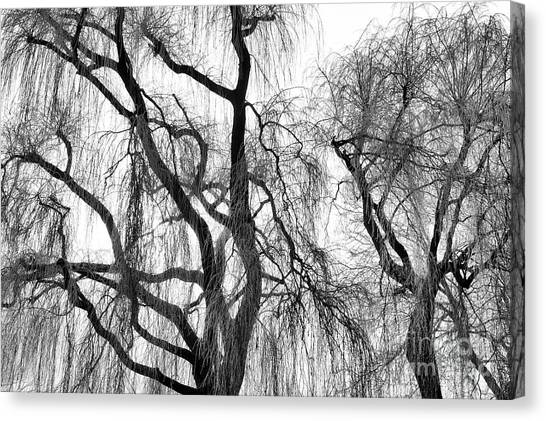 Weeping Willows Canvas Print - Winter Willows by Tim Gainey