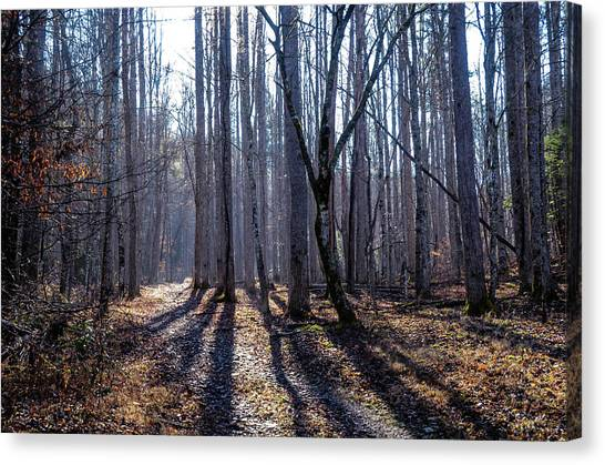 Winter Woods Canvas Print