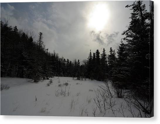 Winter Woods Canvas Print by Eric Workman