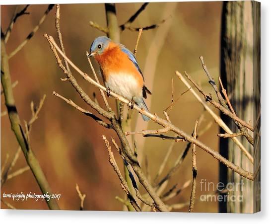 Winter's Bluebird  Canvas Print