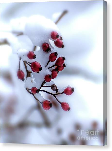 Winter's Color Canvas Print