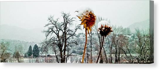 Winters Field Canvas Print