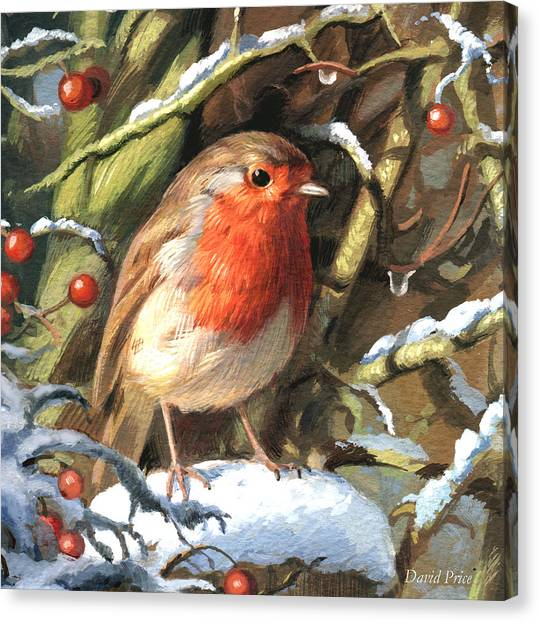 Robin Canvas Print - Winters Friend by David Price
