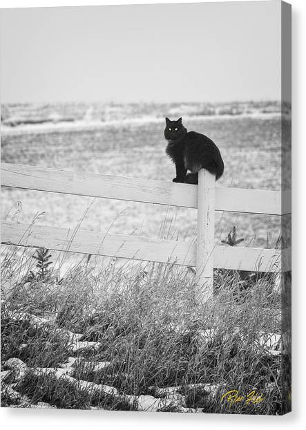 Winter's Stalker Canvas Print