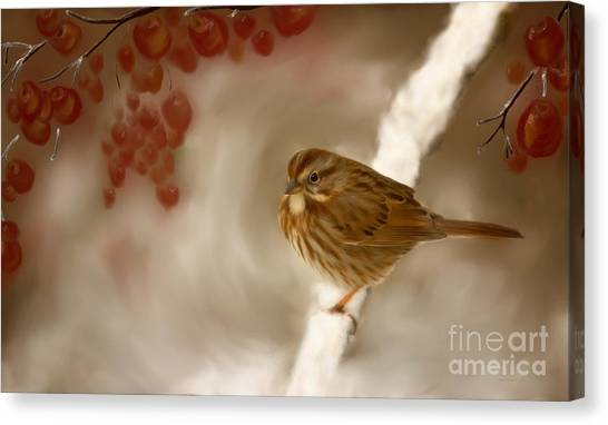 Wintertime Sparrow Canvas Print