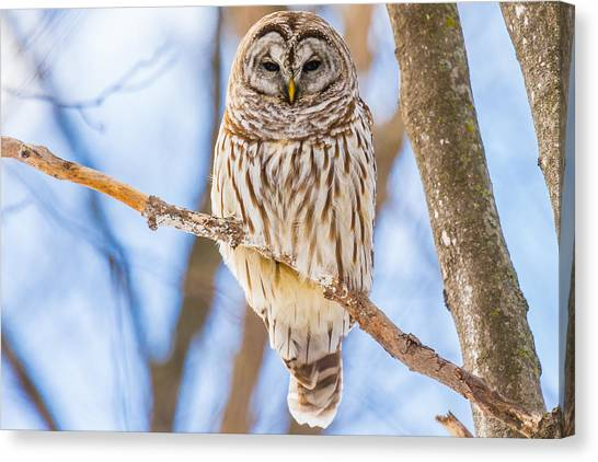 Wintry Stare Canvas Print