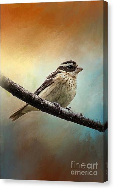 Wisconsin Songbird Canvas Print