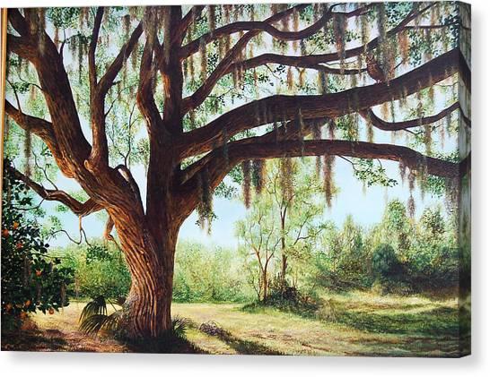 Wise Old Oak Canvas Print