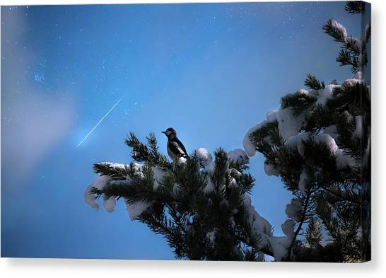 Wish Upon A Shooting Star Canvas Print