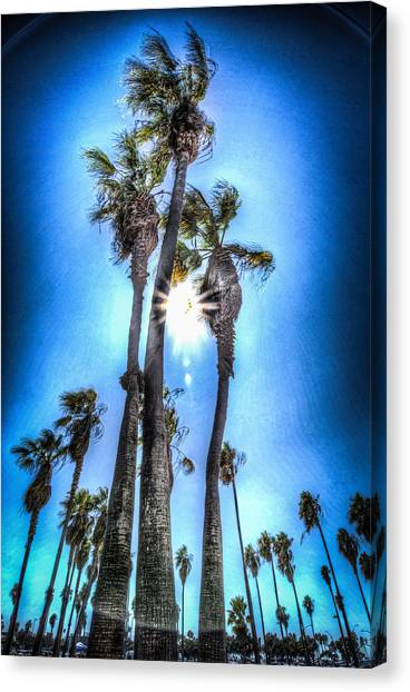 Canvas Print featuring the photograph Wispy Palms by T Brian Jones