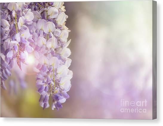 Lilac Bush Canvas Print - Wisteria Flowers In Sunlight by Jane Rix
