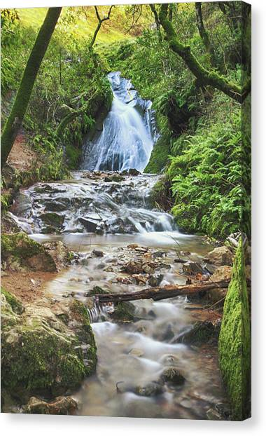 Marin Canvas Print - With All I Have by Laurie Search