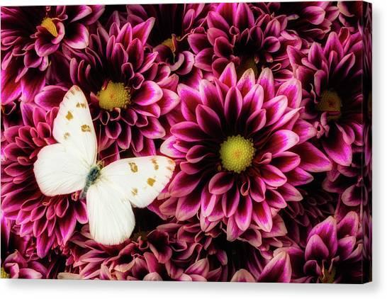 Pom-pom Canvas Print - With Butterfly On Poms Spray by Garry Gay