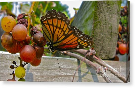 With The Grape Canvas Print by PJ  Cloud