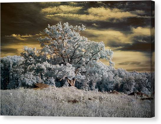Witness To History Canvas Print
