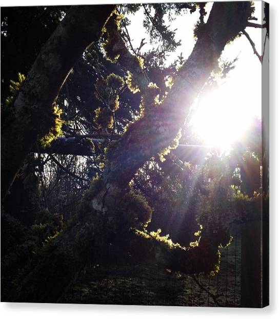 Sun Canvas Print - Woke Up To This Beautiful Sight This by Blenda Studio