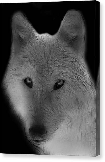 Arctic Wolf Canvas Print - Wolf - Black And White by Sandy Keeton