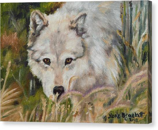Wolf Among Foxtails Canvas Print