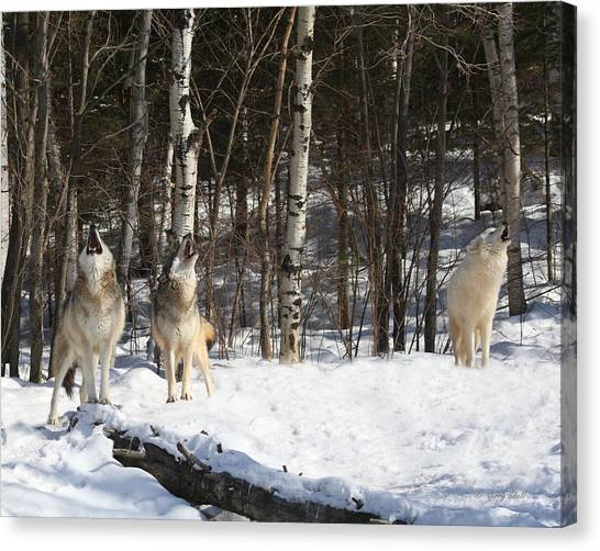 Wolf Choir Canvas Print